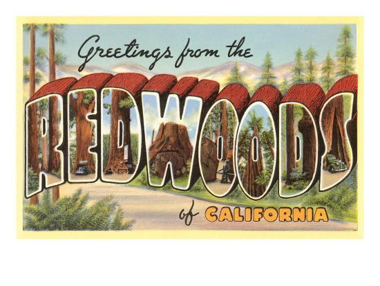 Greetings from Redwoods, California--Art Print