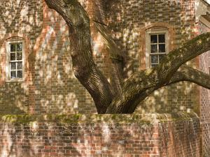 A Tree Grows from the Brick Courtyard of a Historic Colonial Home by Greg