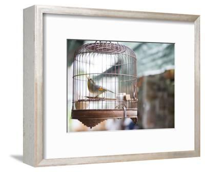 Bird in Cage at Mong Kok Bird Market