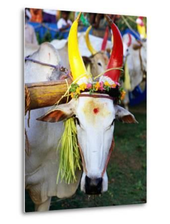 Bull Decorated for Pongal Festival, Mahabalipuram, Tamil Nadu, India