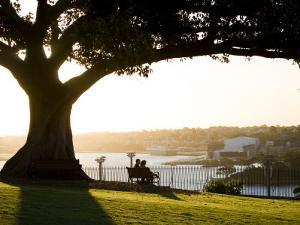Late Afternoon on Lawn Overlooking Sydney Harbour at Sydney Observatory by Greg Elms