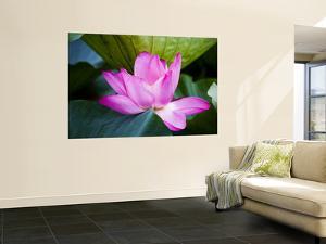 Lotus Flower Detail, West Lake by Greg Elms