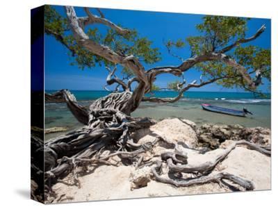Gnarled Tree at Jake's Resort, Treasure Beach