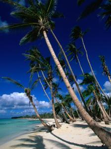 Palm Tree Lined Beach, La Romana, La Romana, Dominican Republic by Greg Johnston