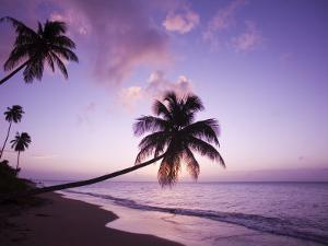 Palm Trees at Sunset, Coconut Grove Beach at Cade's Bay, Nevis, Caribbean by Greg Johnston