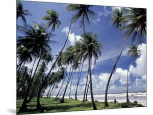 View of Manzanilla Bay, Port of Spain, Trinidad, Caribbean by Greg Johnston