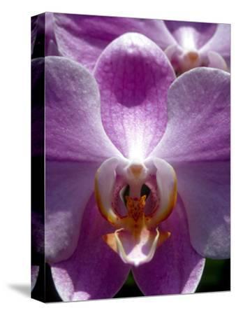 Wild Orchids in Mountain Pine Ridge Rainforest, Cayo District, Belize