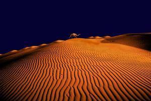 DESERT by Greg Newington