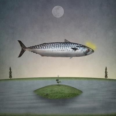 POSTER Fishing Fish Art CANVAS PRINT MACKEREL Painting by David Andrews
