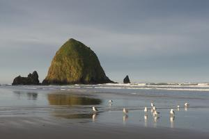 Haystack Rock on Cannon Beach, Oregon by Greg Probst