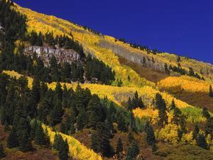 Hillside of Aspen Trees and Evergreen Trees, La Plata County, Colorado by Greg Probst