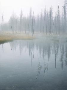 Lodge Pole Pines Along Fire Hole Lake, Yellowstone NP, Wyoming by Greg Probst