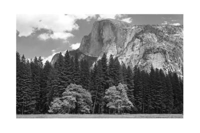 Half Dome Mountain Behind a Forest by Greg Winston