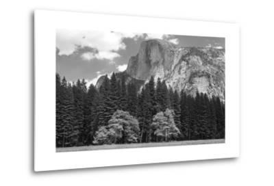 Half Dome Mountain Behind a Forest