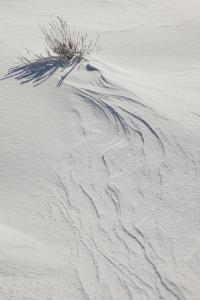 Wind-Blown Patterns In Snow Behind Sagebrush by Greg Winston