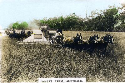 Grenfell Wheat Farm, Australia, C1920S--Giclee Print
