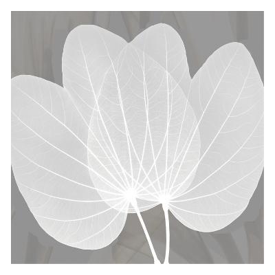 Grey Beauty-Albert Koetsier-Art Print