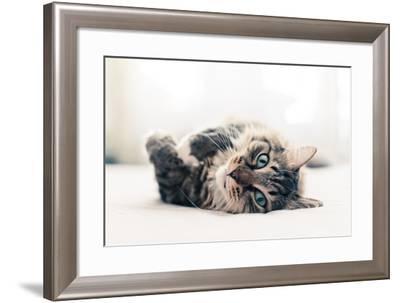 Grey Cat Lying on Bed-Valeri Potapova-Framed Photographic Print