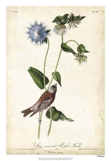 Grey-crowned Purple Finch-John James Audubon-Giclee Print
