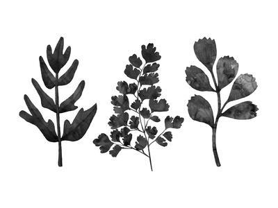https://imgc.artprintimages.com/img/print/grey-ferns_u-l-f9e8qw0.jpg?p=0