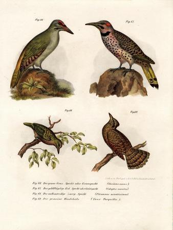 https://imgc.artprintimages.com/img/print/grey-headed-woodpecker-1864_u-l-pvq4mb0.jpg?p=0