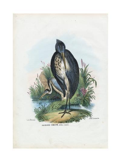 Grey Heron, 1863-79-Raimundo Petraroja-Giclee Print