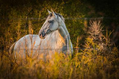 Grey Horse in Field-Stephen Arens-Photographic Print