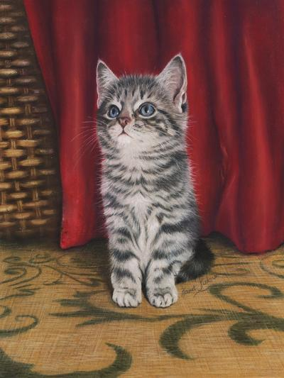 Grey Kitten and Red Curtain-Janet Pidoux-Giclee Print