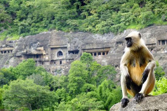 Grey langur monkey (Hanuman Langur) (Semnopithecus sp.) outside the Ajanta Caves, UNESCO World Heri-Alex Robinson-Photographic Print