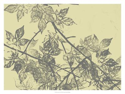 https://imgc.artprintimages.com/img/print/grey-leaves-i_u-l-f7mk2v0.jpg?p=0