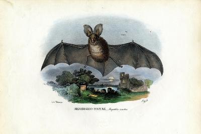 Grey Long-Eared Bat, 1863-79-Raimundo Petraroja-Giclee Print
