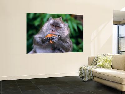 Grey Monkey Eating in Grand Bassin-Olivier Cirendini-Wall Mural