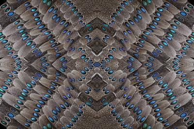 Grey Peacock Tail Feathers Design-Darrell Gulin-Photographic Print