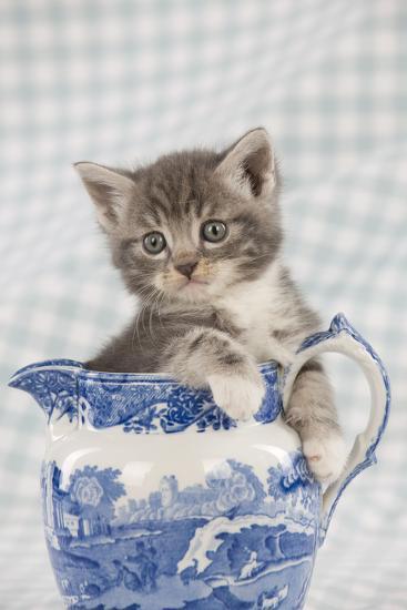 Grey Tabby Kitten Sitting in China Jug--Photographic Print