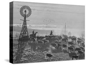 Cattle Round Up on South Dakota Cattle Ranch by Grey Villet
