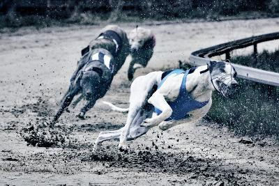 Greyhound Race-Klaus Vedfelt-Photographic Print