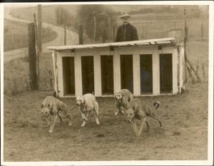 Greyhound Training