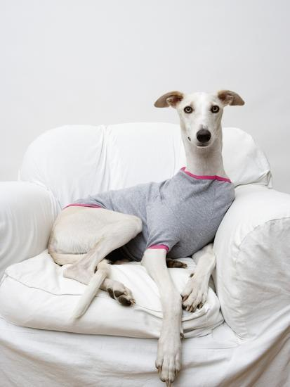 Greyhound Wearing a T-Shirt-Estelle Klawitter-Photographic Print