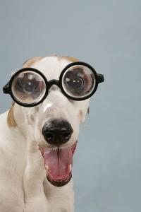 Greyhound Wearing Joke Magnified Glasses