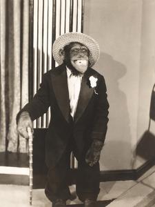 Grinning Monkey in Tuxedo