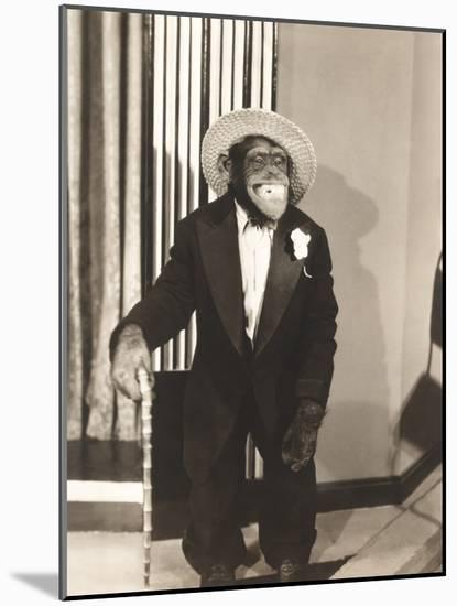 Grinning Monkey in Tuxedo-null-Mounted Photo