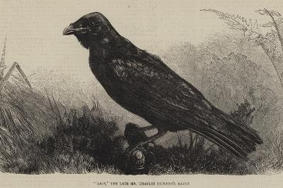 Grip, the Late Mr Charles Dickens's Raven--Giclee Print