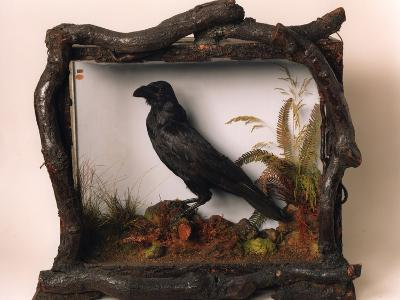 Grip, the Pet Raven of Charles Dickens--Photographic Print