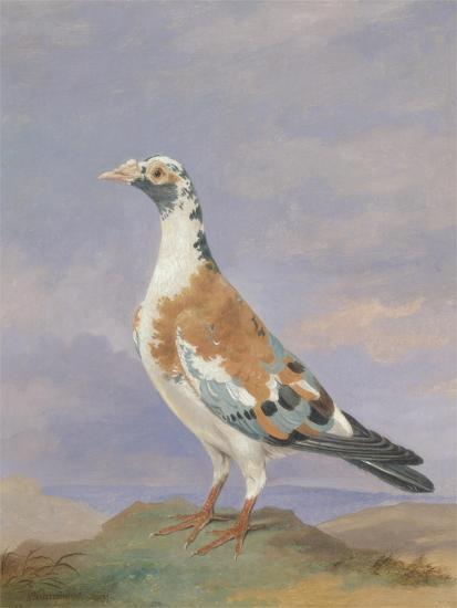 Grizzle Carrier Pigeon-D. the Younger Wolstenholme-Giclee Print