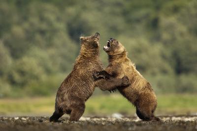 Grizzly Bear, Katmai National Park, Alaska-Paul Souders-Photographic Print