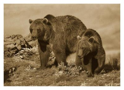 Grizzly Bear mother with a one year old cub, North America-Tim Fitzharris-Art Print