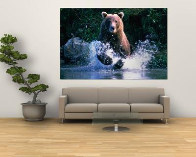Grizzly Bear Running in Kinak Bay, Katmai National Park, U.S.A.-Mark Newman-Giant Art Print