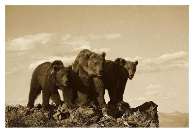 Grizzly Bear with two one-year-old cubs, North America - Sepia-Tim Fitzharris-Art Print