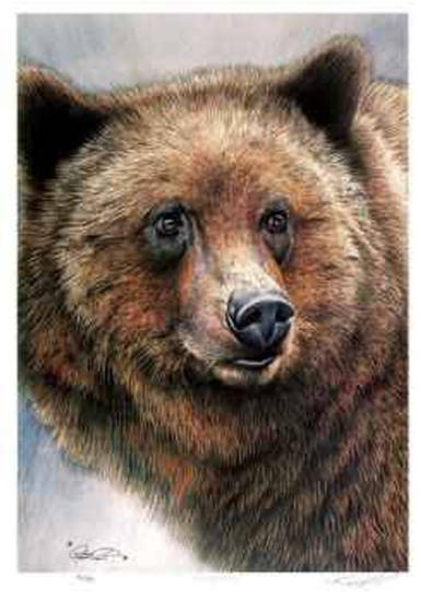 Grizzly Bear-Robert Pow-Collectable Print