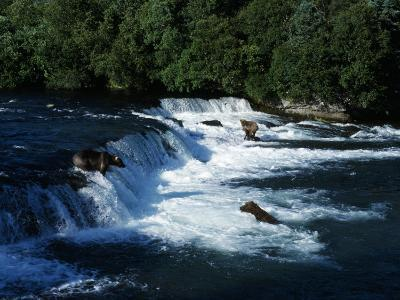 Grizzly Bears Fishing-Jeff Foott-Photographic Print